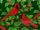 緋色の小鳥